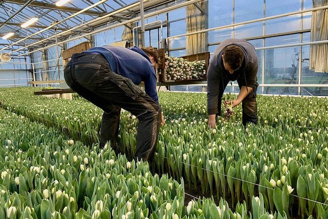 Tulip Farms & Keukenhof - Private Experience incl. pick-up in the region