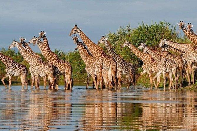 5 Day Tanzania Tour from Arusha: Tarangire, Serengeti, Ngorongoro