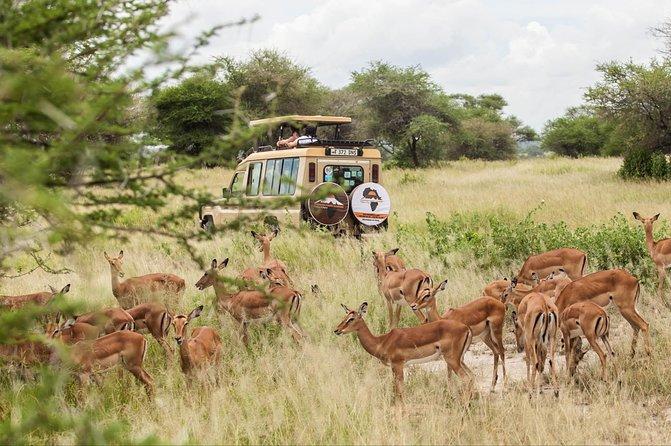 Ngorongoro 3 Days Safari Via Lake Manyara & Tarangire