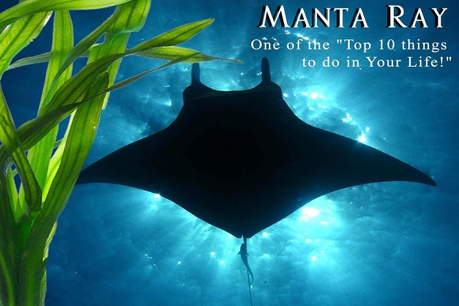 Big Island, Kona Manta Ray Night Snorkel- Small Group