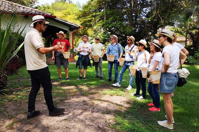 Hands-On Tour to Coffee Plantation — Basic Option