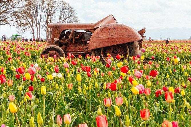 All Inclusive Tulip Festival Package