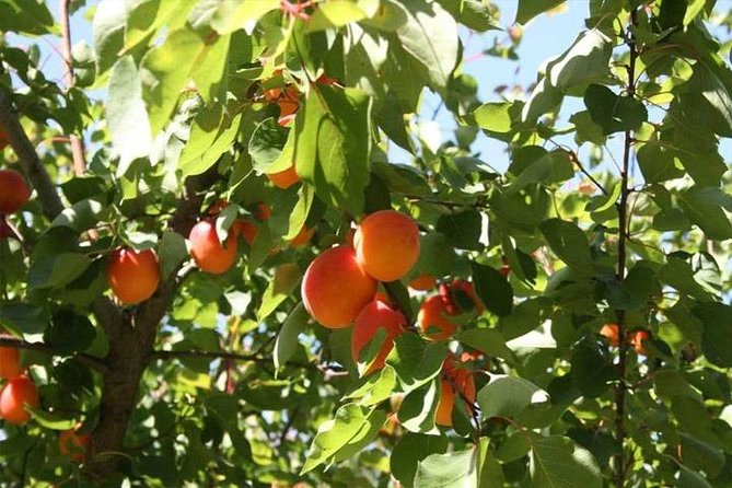 Melbourne Private Fruit Picking Tours (Up to 3 Persons)