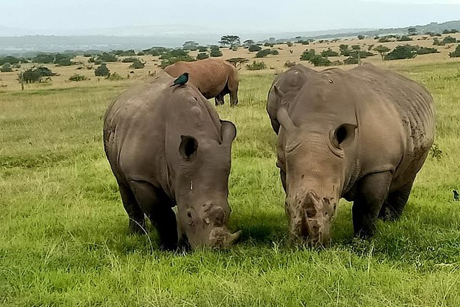 7 Days Rhino safari