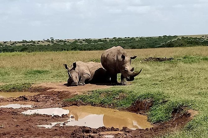 5 Days Olpejeta Conservancy & Solio Rhino sanctuary