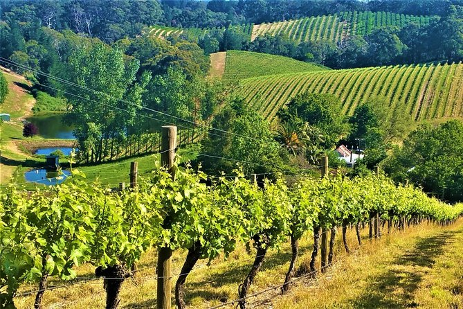 Adelaide Hills Private Day Tour