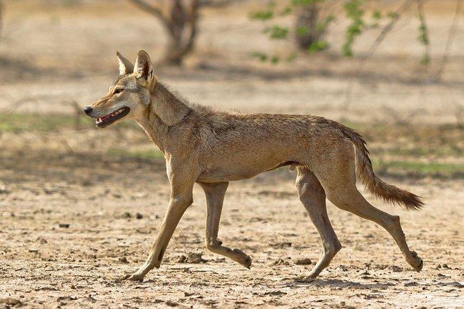 Blackbuck Safari from Rajkot (2 Days)