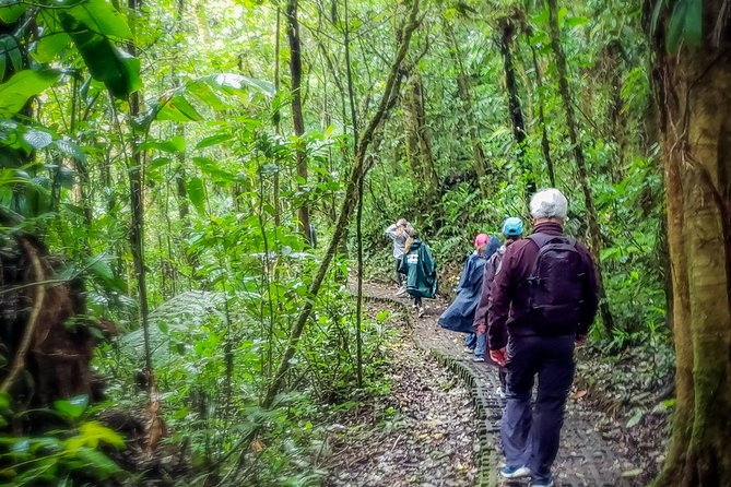 Package | Monteverde Cloud Forest + Curi-Cancha Reserve + Night Hike (Private)