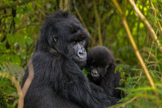 4 Days Private Gorilla Safari in Uganda and Rwanda