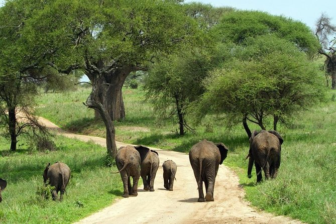 Tarangire National Park Full-Day Tour from Arusha