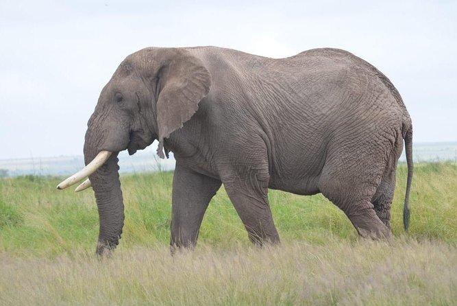 4 Days in Masai Mara and Lake Nakuru