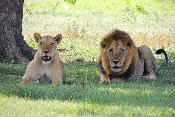2 Days 1 Night Masai Mara Group Joining Safari