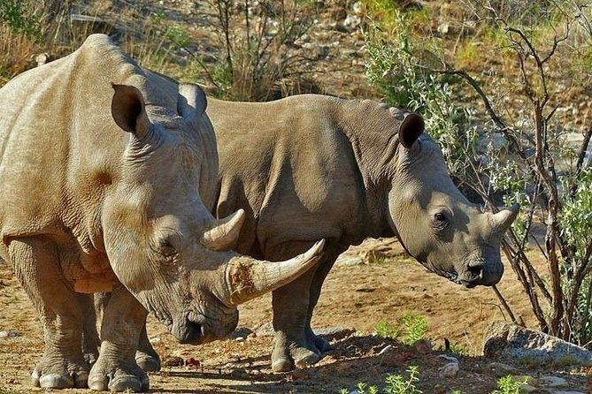Gocheganas Rhino Family