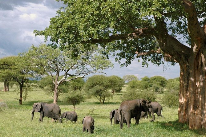 7 Day Grand Tanzania Safari