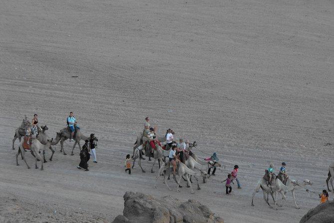 Half-Day Hurghada Camel Ride and Star Gazing Adventure Trip