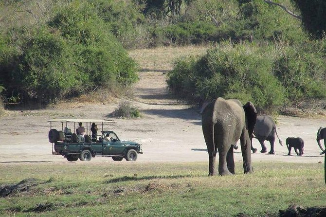 Moremi Game Reserve Day Trip from Maun