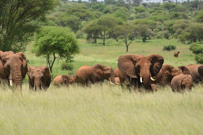 Amazing Tanzania Safari 6 days