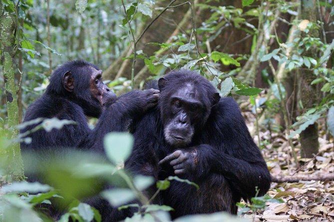 11 Days Uganda +Gorillas
