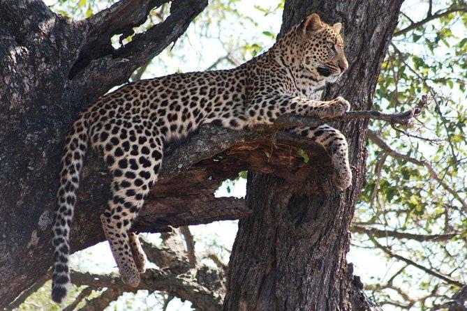 SELF DRIVE - Kruger National Park - Panoramic - 2 People / 4 Nights