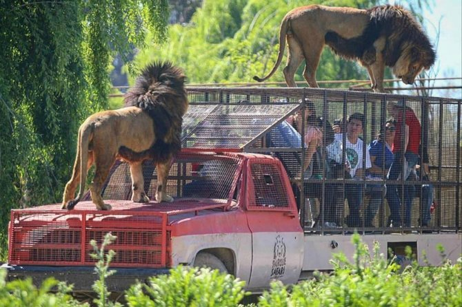 Safari Park Full Day from Santiago
