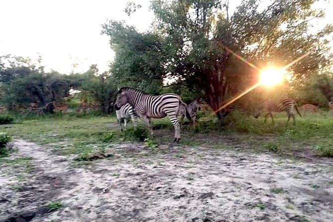 From Victoria Falls: Chobe Boat Safari + Game Drive + Lunch
