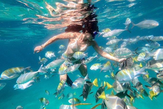 Snorkeling at Pelicans Rock