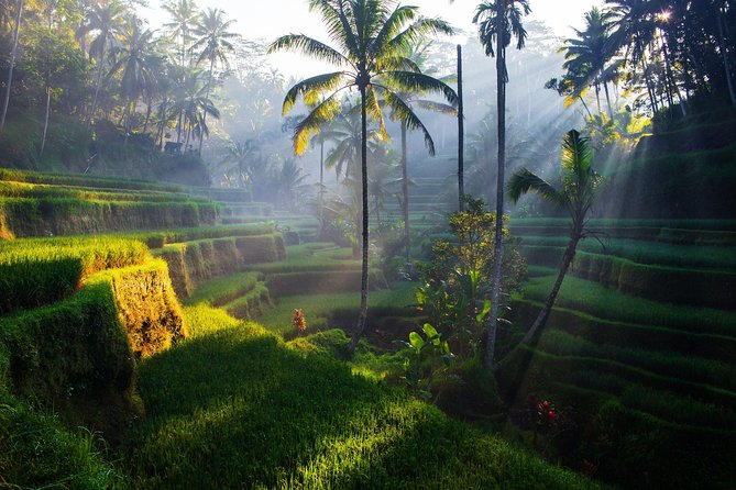 Ubud fun tours