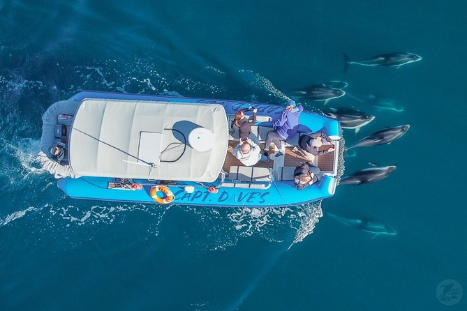 Overhead view of Fast Cat & bow riding dolphins