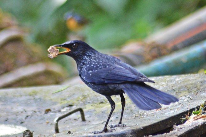Bird Watching Doi Inthanon