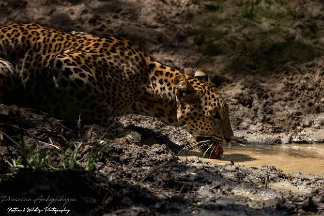 One Day Wildlife Tour to Wilpattu National Park from Colombo