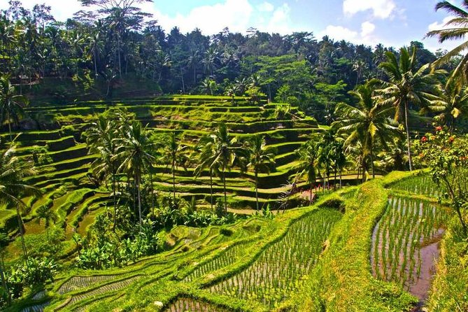 Full-Day Private Tour to Exploring Ubud and Tanah Lot Temple