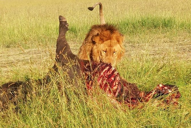 5 Days migration Maasai mara - Lake Nakuru - lake Naivasha safari