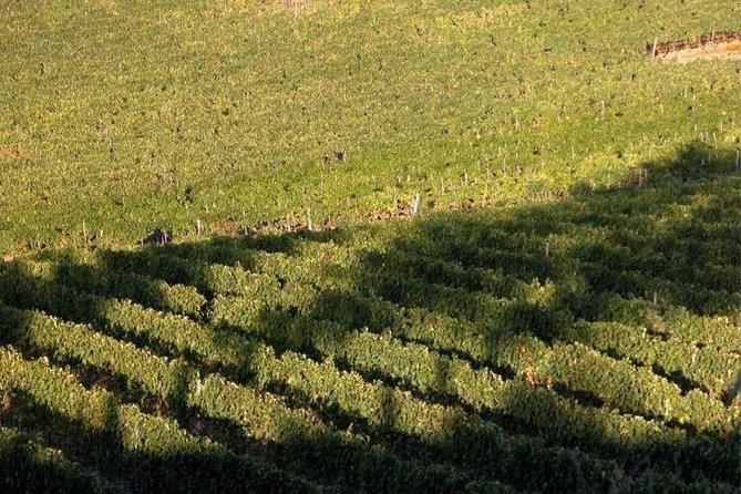 Classic Chianti wine tasting experience at La Castellina close to Siena