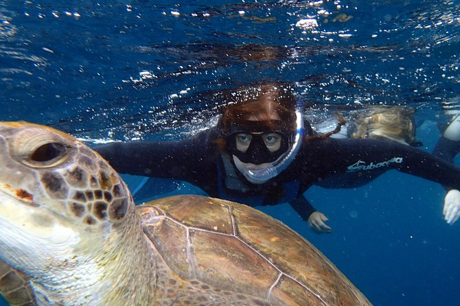 Snorkelling Turtle Experience