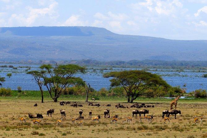 Day Tour to Lake Naivasha and Crescent Island