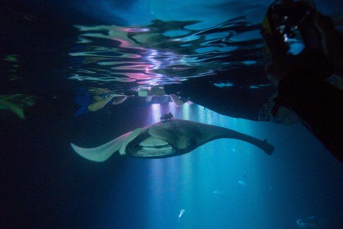 Manta Ray Night Snorkel Tour from Kona