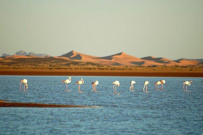 12 Days Morocco Cultural Tour