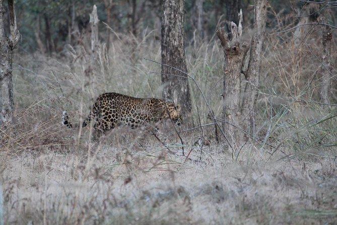 Nagzira Tiger Sanctuary from Nagpur