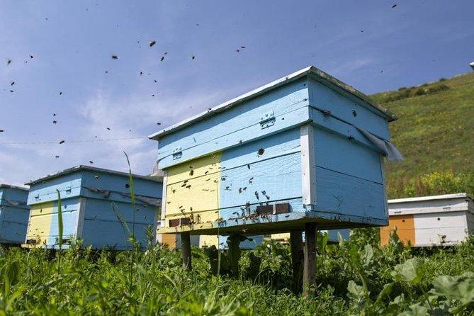 The Kyrgyz Buzz   10 Day Tour of Beekeeping in Kyrgyzstan
