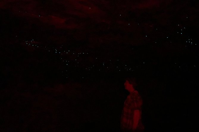 Blue Mountains Hiking Glow worms Cave Wildlife Spotlighting Night Adventure photo 11