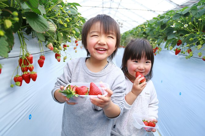 Strawberry picking 30 minutes all-you-can-eat & stone BBQ