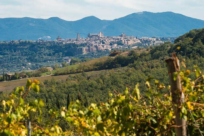 Behind the Label: wine tasting and tour close to Orvieto