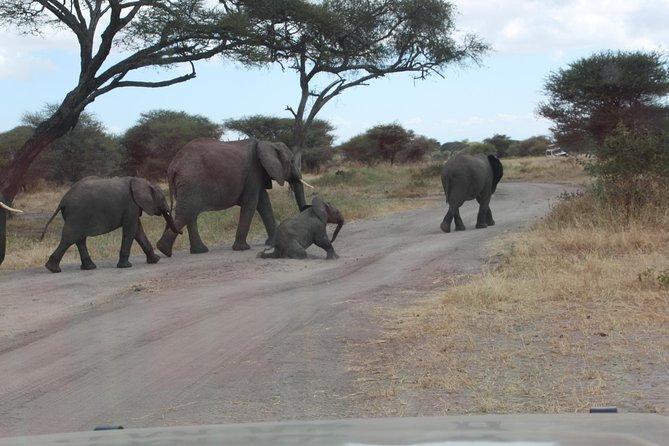8 Days Tanzania Luxury Bush Safari Tours