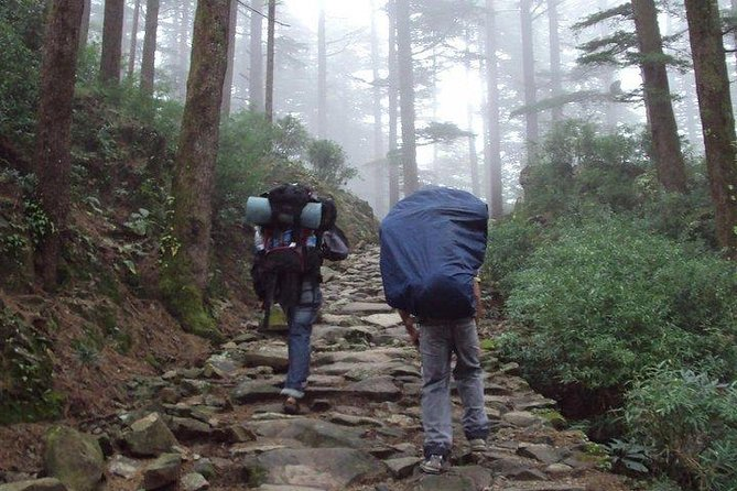 Overnight Camping in Lap of Nature at Triund from Dharamshala photo 3
