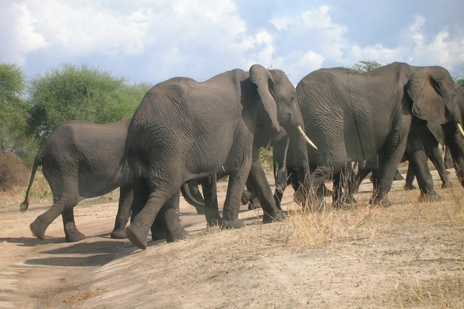 7 days Serengeti migration-safari and Ngorongoro Tanzania Classic.