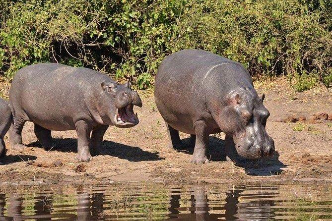 Chobe Safari Day Trip From Victoria Falls