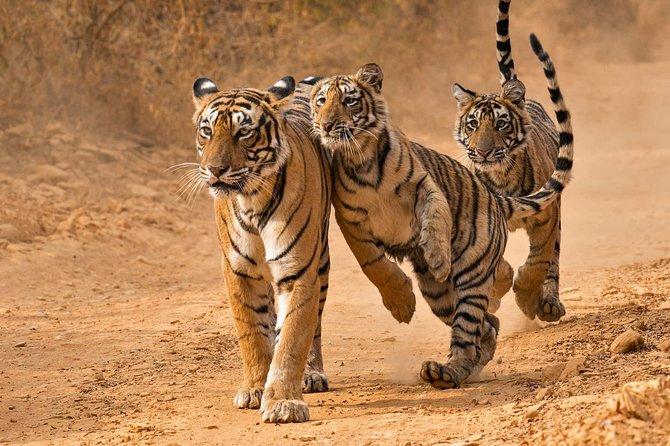 Jaipur Sightseeing With Wildlife Safari Tour