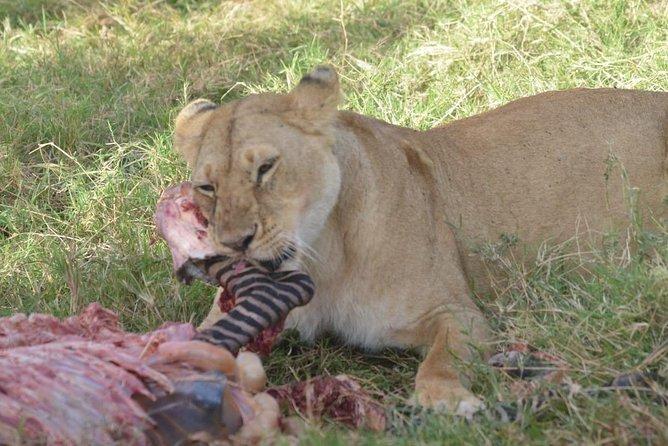 6 Days in Masai Mara- Lake Nakuru- Amboseli