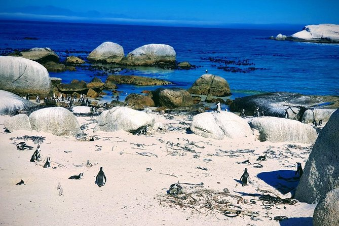 Penguin Boulders beach Half day tour from cape town