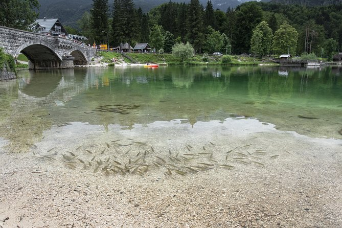 Fly Fishing Lake Bohinj